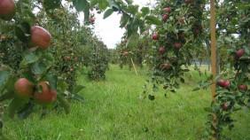 mm-quali-gal1_282x158-crop-wr.jpg